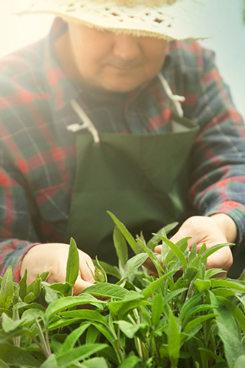 herbsmark